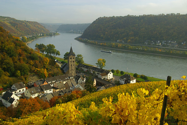 Wellmich vineyards on Rhine River